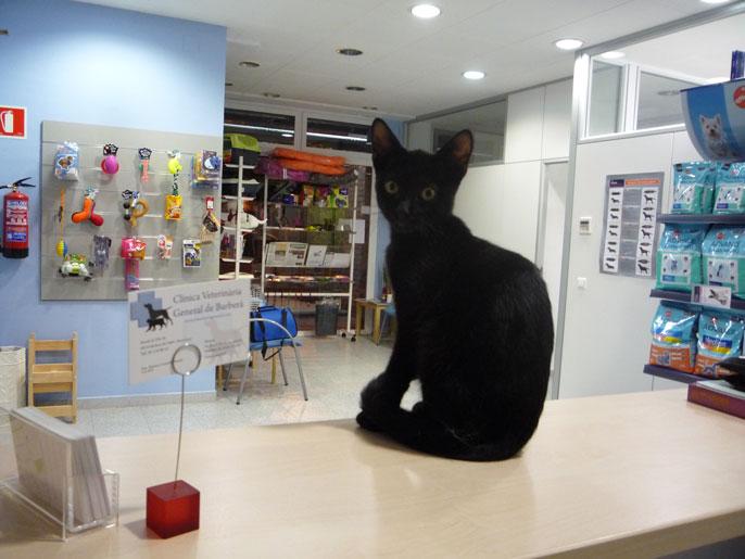 gat-mostrador