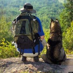 gos muntanya