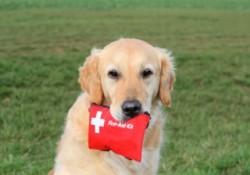 kit de primers auxilis gos